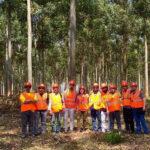 Ambiente | Gestión Forestal