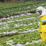 PREVENCIÓN EN MANEJO DE AGROQUÍMICOS